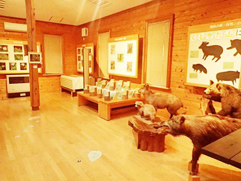 森林科学館 展示室